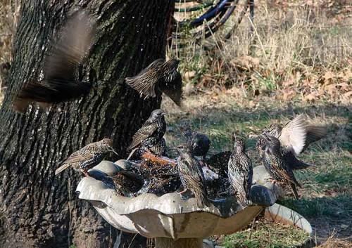 01-03-08 birdbath
