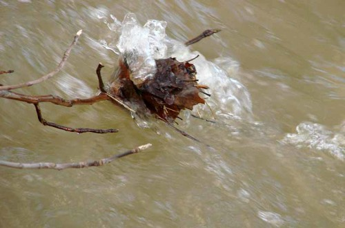 image of limb in creek