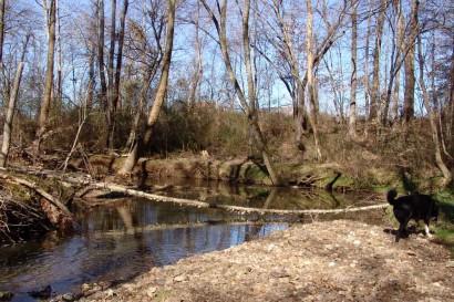 Tree Fallen Over Creek.