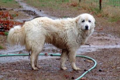 Muddy Maremma/
