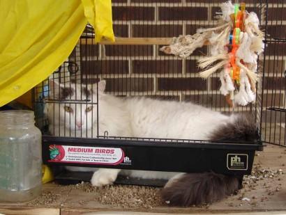Catbird Spot in birdcage.