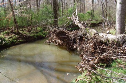 Tree fallen across creek.