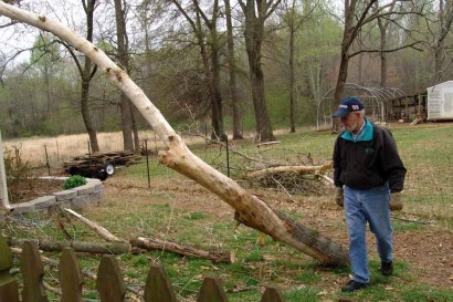 The Farmer Surveying Fallen Tree