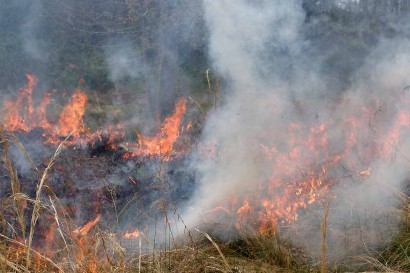 Dried grasses on fire.