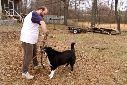 Trying to pull a log away from our farm collie doesn't work.