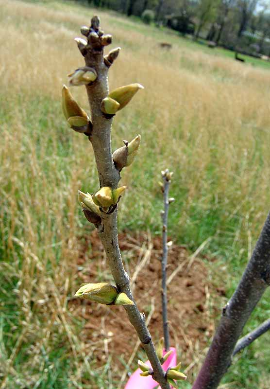 pecan tree – Rural Ramblings…