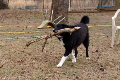 Toby with is prized stick.