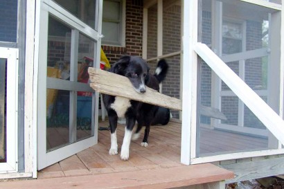 Toby getting through the door with his precious board.