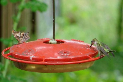 Hummingbird and butterfly sharing a meal at the feeder.