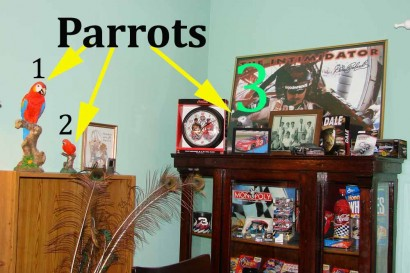 3 Parrots In A Picture (2 fake, 1 real)