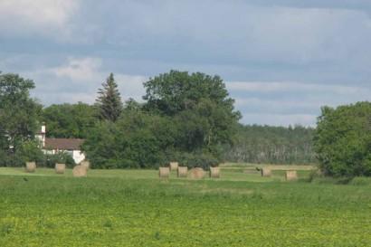 Rolls of hay in field in Manitoba, Canada.