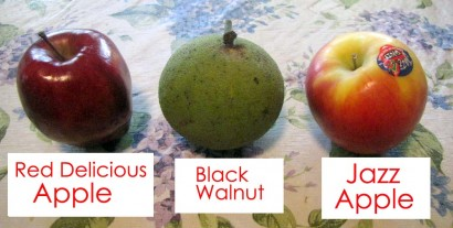 Comparing Apples To Walnuts (RuralRamblings.com)