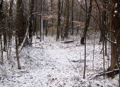 A dusting of snow in the woods.