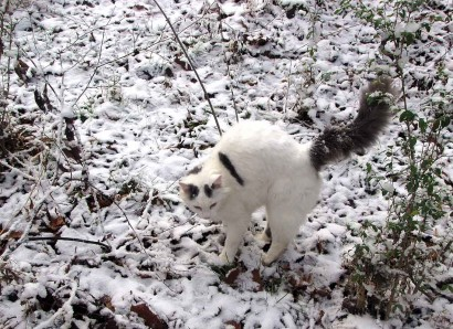 Our cat, Spot, out in the snow.
