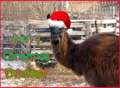 "Llama Samson says ""Merry Christmas Dudes!"""