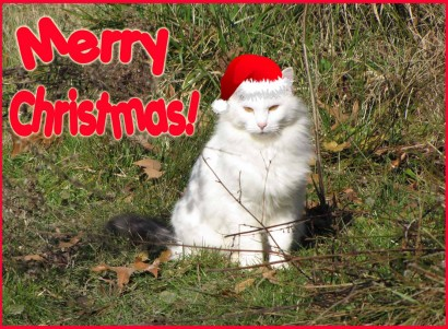 Merry Christmas from the cat, Spot.