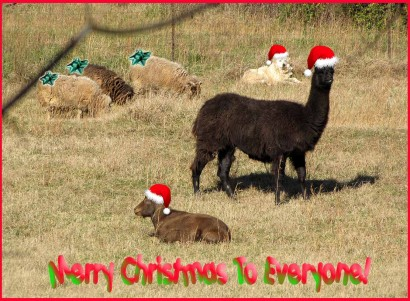 Merry Christmas Critters