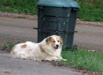 Neighbor's dog, Gracie.