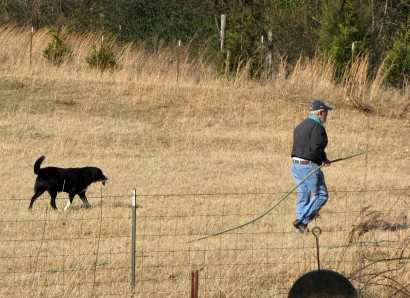 Toby and The Farmer going to water trees.