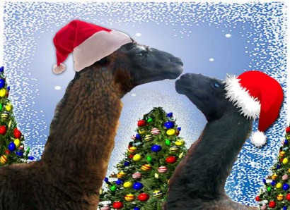 Christmas Llamas