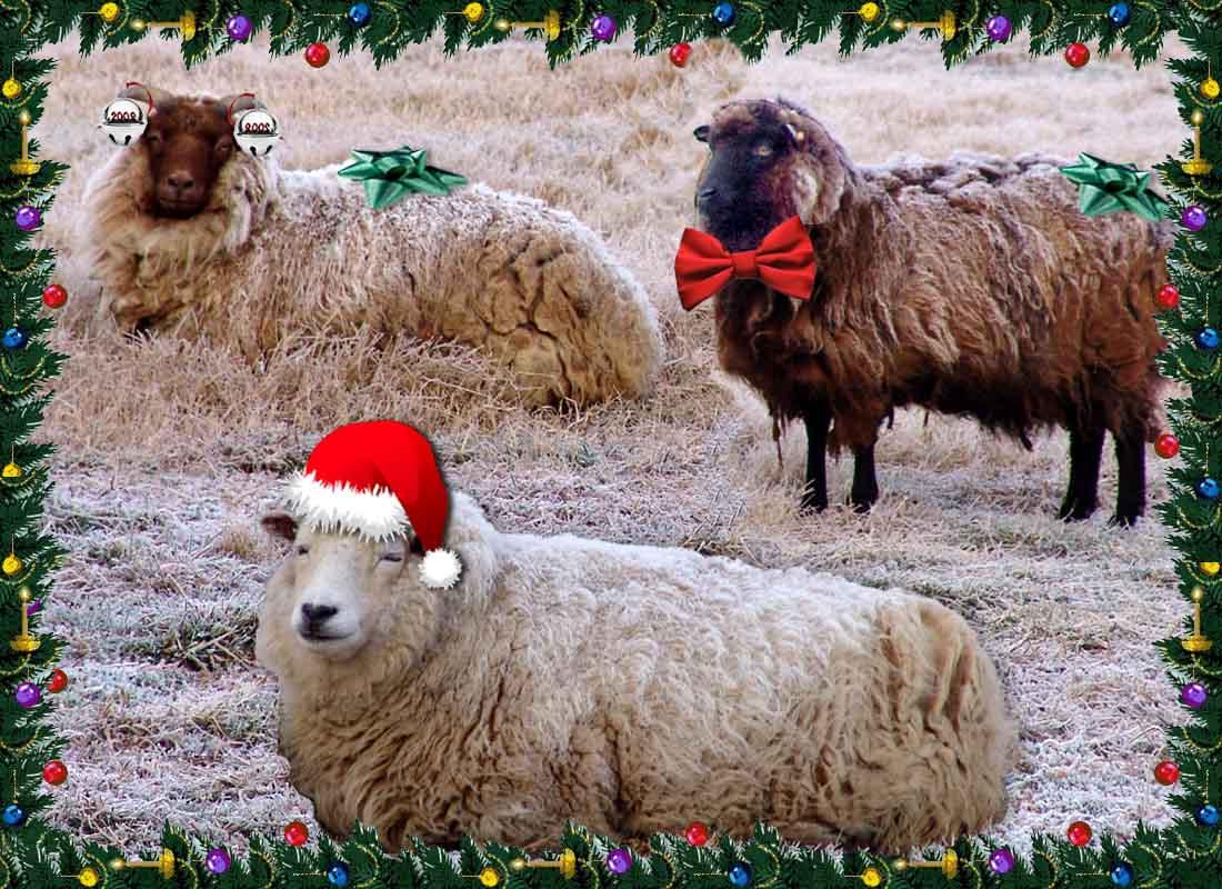 Three sheep - photo#37