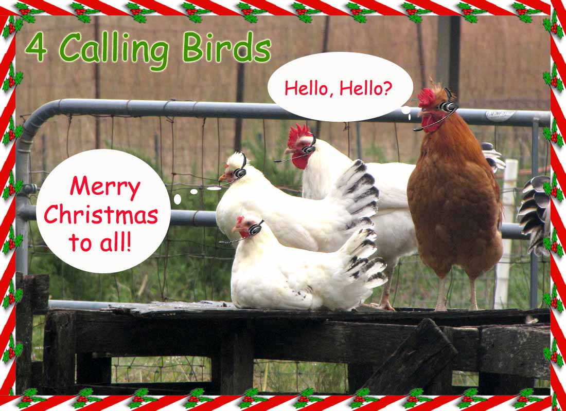 12 Days Of Christmas, Country Style   Rural Ramblings...
