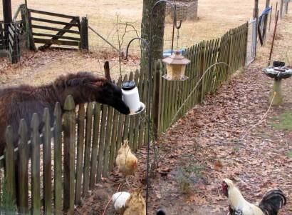 Llama Bird Feeder Diner