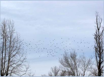 Wild birds photo