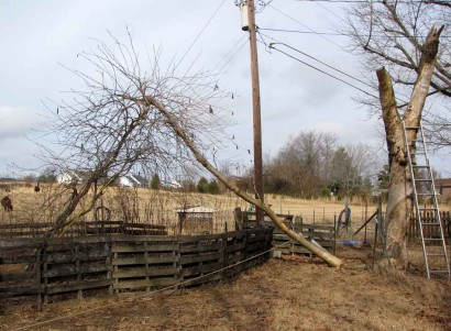 Tree trunk offshoot fallend onto guide wires.