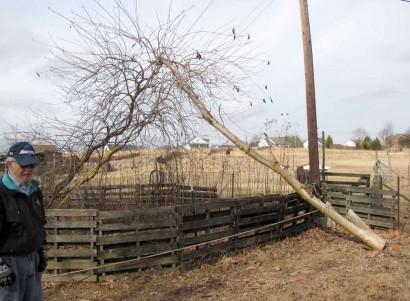 Lumberjack on the farm beside downed tree.