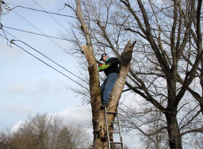 Lumberjack on the farm, way too close to electric lines!