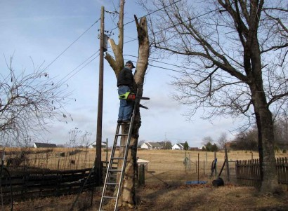 The Farmer and his chainsaw, high up in a tree, oh my!