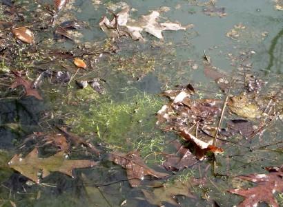 Pond in spring.