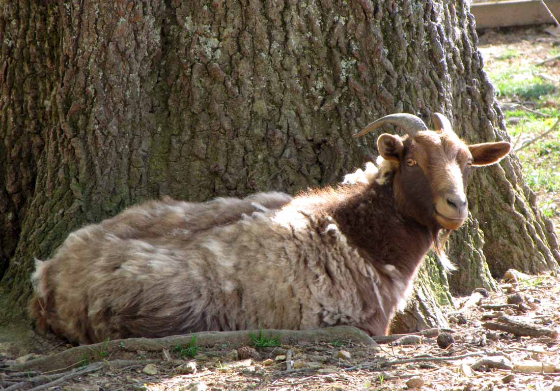 how to stop cashmere from shedding