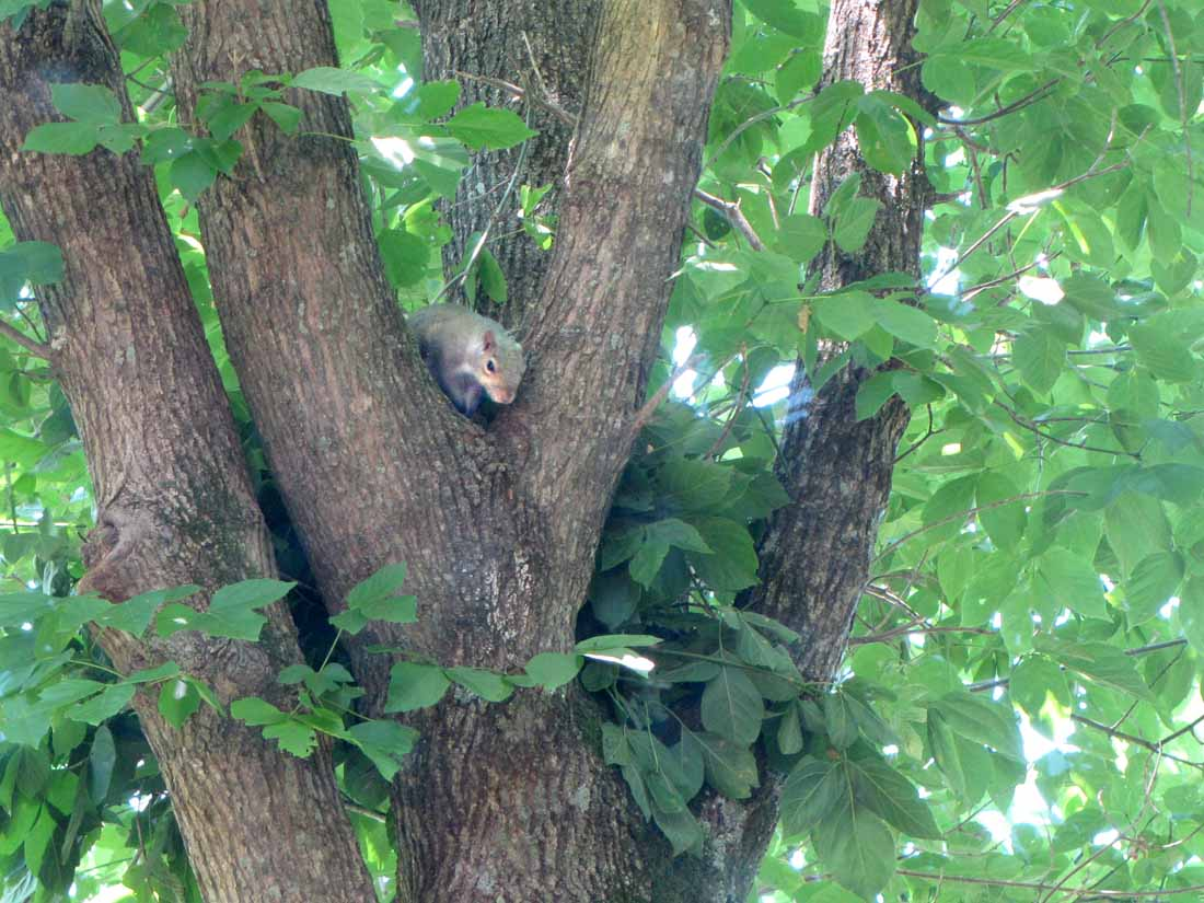 Squirrel Nest Rural Ramblings