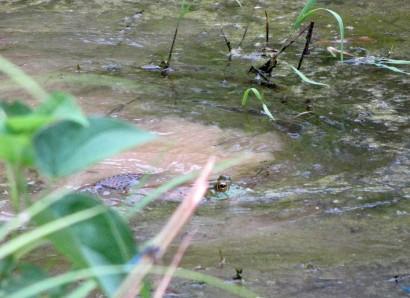 frog and snake