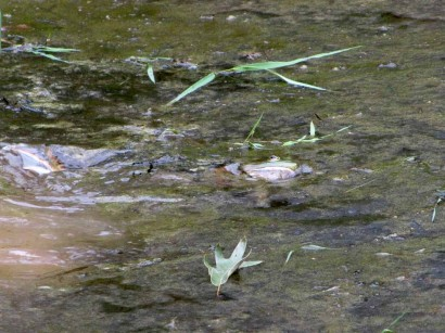 frog and snake in pond