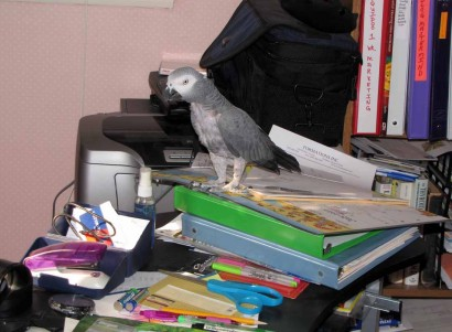 photo of parrot