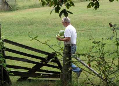 photo of man with watermelons