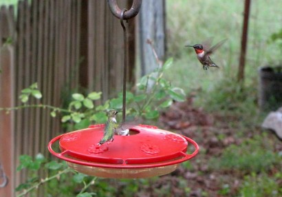 2 hummingbirds
