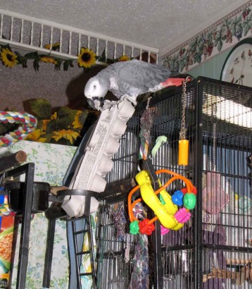 pic of parrot