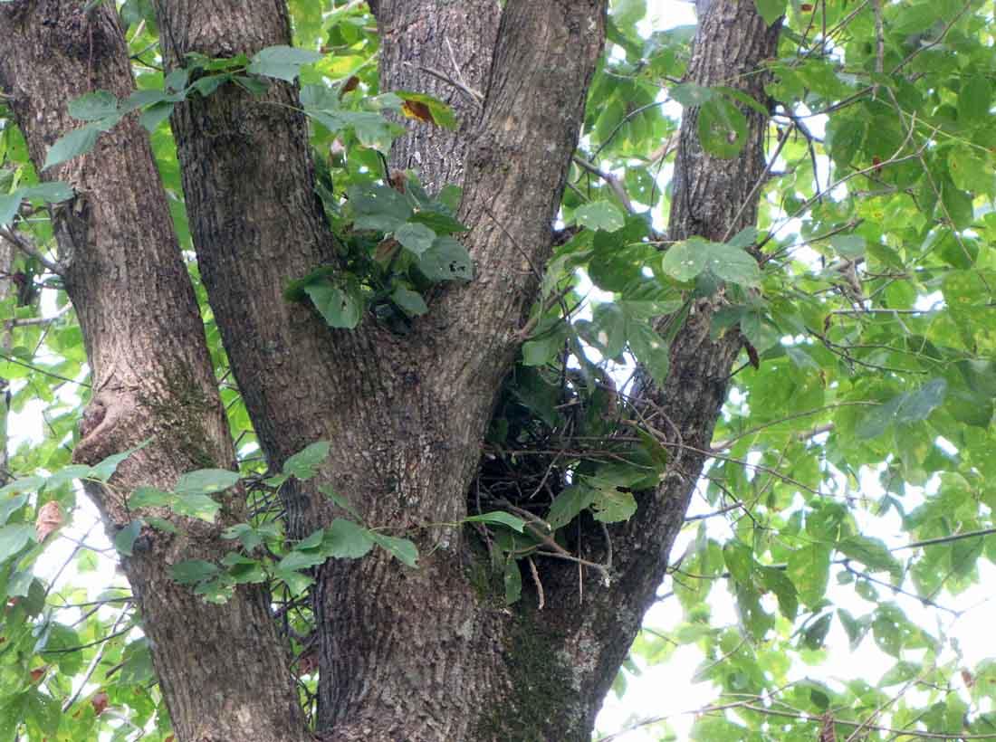 Squirrel Nest Take Two Rural Ramblings
