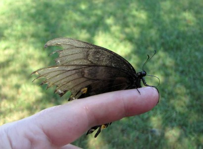photo of butterfly