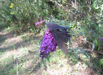 photo of butterfly on butterfly bush