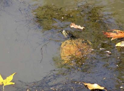 photo of turtle