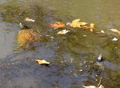 picture of turtles