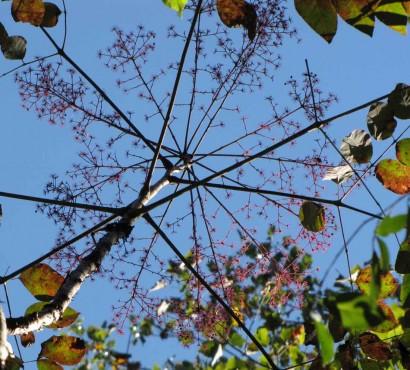 photo of tree