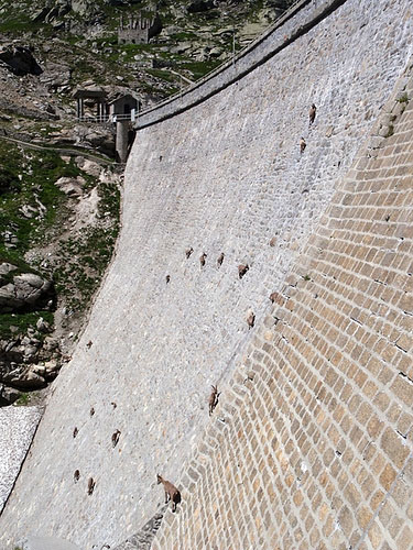 photo of ibex on side of dam