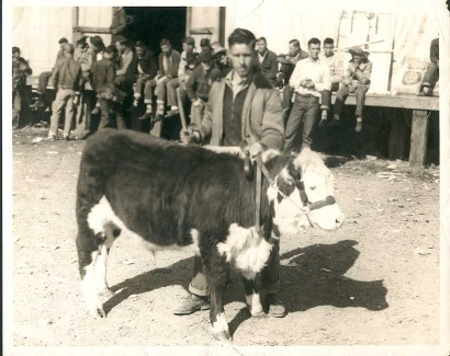 photo of young man with steer