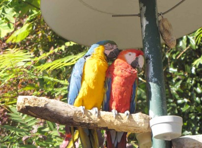picture of macaw birds